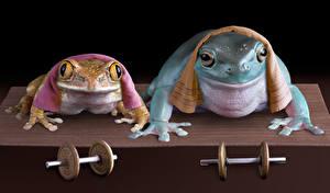 Bilder Frosche Handtuch 2 Hanteln Lustige ein Tier