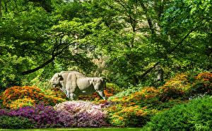 Fotos Deutschland Park Amerikanischer Bison Rhododendren Skulpturen Strauch Ast Bremen Rhododendronpark Natur