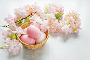 Bilder Feiertage Ostern Blühende Bäume Ei Ast