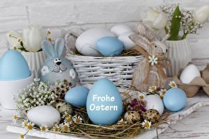 Hintergrundbilder Feiertage Ostern Kaninchen Kamillen Ei Nest Deutsch Weidenkorb
