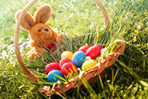 Pictures Holidays Easter Rabbit Grass Wicker basket Eggs