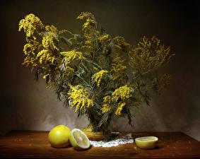 Hintergrundbilder Mimosen Zitrone Ast Blumen