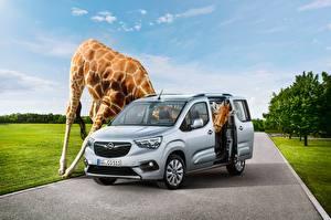 Fotos Opel Giraffen Lustiger 2018 Combo Life ein Tier Autos