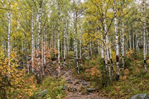 Hintergrundbilder Parks Steine Birken Taganay National Park Ural