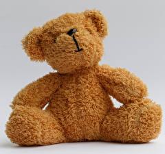 Fotos Teddybär Nahaufnahme Grauer Hintergrund