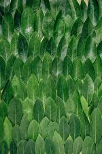 Images Texture Foliage Green Leaves Nature