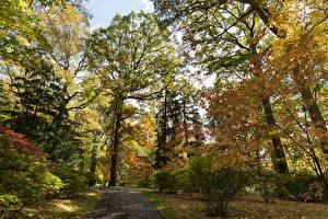 Fotos USA Park Herbst Bäume Strauch Blattwerk Winterthur Delaware Natur