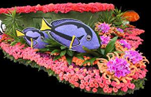 Hintergrundbilder USA Park Fische Rosen Orchideen Kalifornien Design Pasadena Blumen
