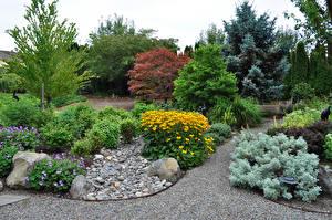 Fotos USA Park Gazania Strauch Portland Oregon Natur