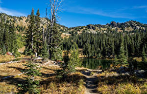 Fotos Vereinigte Staaten Park See Gebirge Fichten Sheep Lake Rocky Mountain National Park Natur