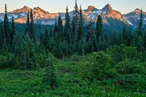 Fotos Vereinigte Staaten Park Gebirge Wälder Fichten Gras Mount Rainier National Park Natur