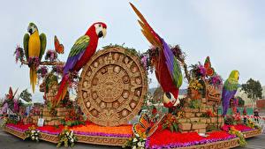 Hintergrundbilder USA Park Papageien Rosen Schmetterlinge Kalifornien Design Pasadena Natur