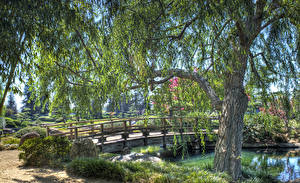 Image USA Parks Pond Bridges California Los Angeles Trees Shrubs HDRI Nature