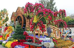 Fotos Vereinigte Staaten Park Rosen Ente Schmetterlinge Kalifornien Design Pasadena Natur