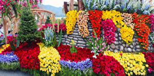Fotos Vereinigte Staaten Park Rosen Schwertlilien Tulpen Gerbera Kalifornien Design Pasadena Blumen