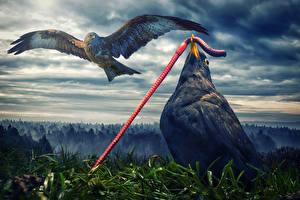 Images Bird Flight Wings Animals