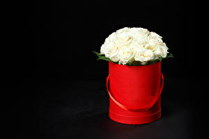 Picture Bouquet Roses Black background White flower