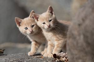 Images Cats Two Kitty cat Animals