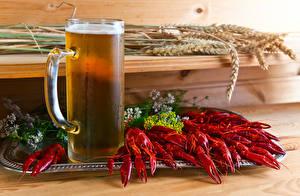 Hintergrundbilder Flusskrebs Bier Becher Spitzen Lebensmittel