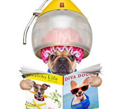 Fotos Hunde Kreativ Weißer hintergrund Bulldogge Zeitschrift