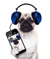 Bilder Hunde Weißer hintergrund Bulldogge Smartphone Kopfhörer Tiere