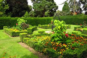 Image England Gardens Tagetes London Shrubs Design Capel Manor Gardens Nature