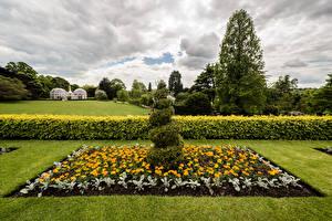 Pictures England Park Tagetes Design Lawn Bush Botanical Gardens Birmingham Nature