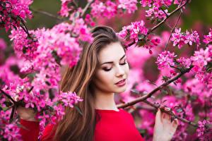 Hintergrundbilder Blühende Bäume Ast Braunhaarige Mädchens
