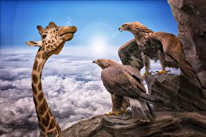 Image Giraffes Eagle Funny animal