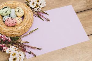 Bilder Feiertage Ostern Chrysanthemen Vorlage Grußkarte Nest Ei