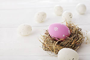 Bilder Feiertage Ostern Eier Nest