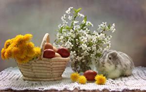 Fotos Feiertage Ostern Hausmeerschweinchen Taraxacum Ei Weidenkorb Ast Tiere