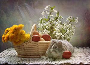 Bilder Feiertage Ostern Stillleben Taraxacum Hausmeerschweinchen Weidenkorb Ei Ast Tiere