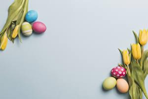 Fondos de escritorio Día festivos Pascua Tulipa Fondo gris Huevo Flores