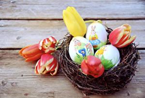 Fotos Feiertage Ostern Tulpen Bretter Ei Nest