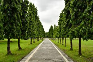Sfondi desktop Indonesia Parco Avenue Alberi Bali