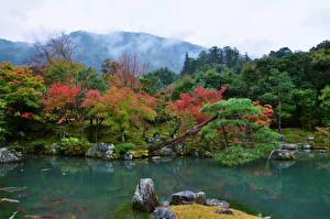 デスクトップの壁紙、、日本、京都市、公園、池、石、木、Tenryuji Temple garden、自然