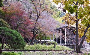 デスクトップの壁紙、、日本、京都市、公園、春、花の咲く木、自然