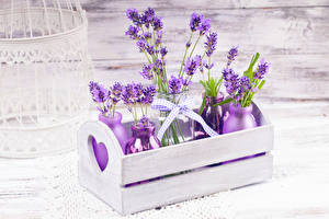 Hintergrundbilder Lavendel Bretter Flaschen Ast Blüte