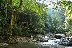 Sfondi desktop Thailandia Tropici Parco Foresta Fiumi Cascata Pietre Pala-U Waterfall Natura