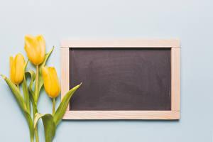 Fondos de escritorio Tulipa Fondo gris Tarjeta de felicitación de la plant Amarillo flor