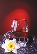 Bilder Alkoholische Getränke Narzissen Weinglas