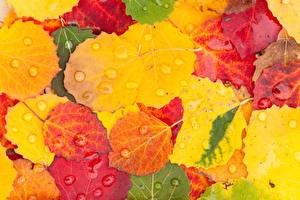 Pictures Autumn Leaf Drops Nature