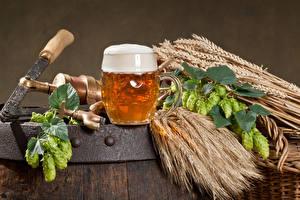 Fotos Bier Echter Hopfen Becher Schaum Spitzen Lebensmittel