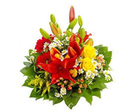Hintergrundbilder Blumensträuße Lilien Rose Gerbera Weißer hintergrund Blumen