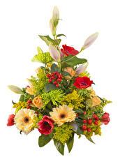 Hintergrundbilder Blumensträuße Rose Gerbera Anemone Lilien Weißer hintergrund Blumen