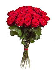 Fondos de escritorio Un ramo Rosas El fondo blanco Rojo Flores