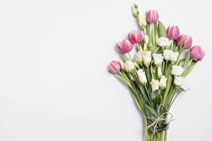 Fondos de escritorio Un ramo Tulipas Eustoma Fondo gris Flores