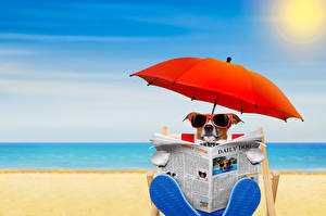 Photo Dogs Beach Jack Russell terrier Eyeglasses Parasol Newspaper