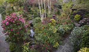 Bakgrunnsbilder England Hage Tulipaner Roser Busker Walsall Garden Natur